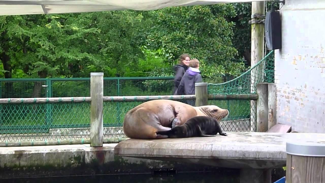 odense zoo rabatt