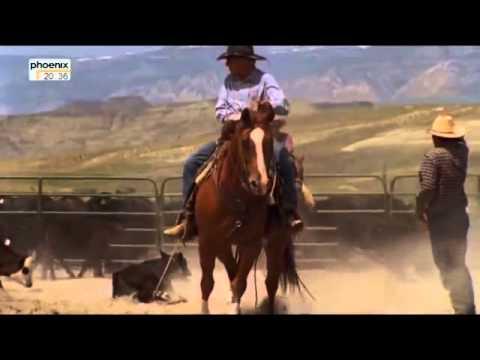 Pferde Doku