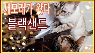 세상에없던고양이모래  커피모래 블랙샌드