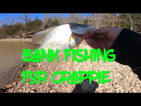 Bank Fishing For Crappie (With A Cameo!!!) | Lake Of The Ozarks