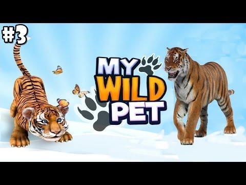 My Wild Pet - Online Animal Rescue - Sumatran Tiger- Android / IOS - Gameplay Part 3