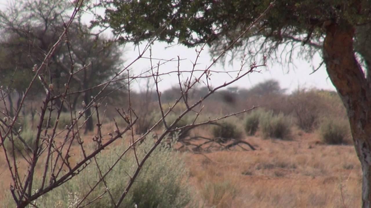 Blesbok Hunting Namibia part 1