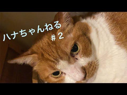 松居直美「ハナちゃんねる #2」