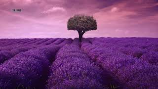 """Download Peaceful Relaxing Instrumental Music, Meditation Calm Nature Music """"lavender fields"""" By Tim Janis"""