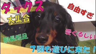 番組提供:ペットライン株式会社(http://www.petline.co.jp/) かわい...