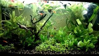 Аквариум 200 литров с живыми растениями и рыбками
