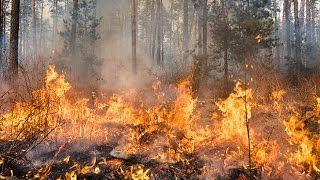 What causes a wildfire? | Natural Disasters