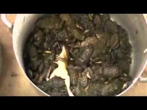 Laos wildlife to be eaten