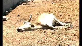 Drought-NBC