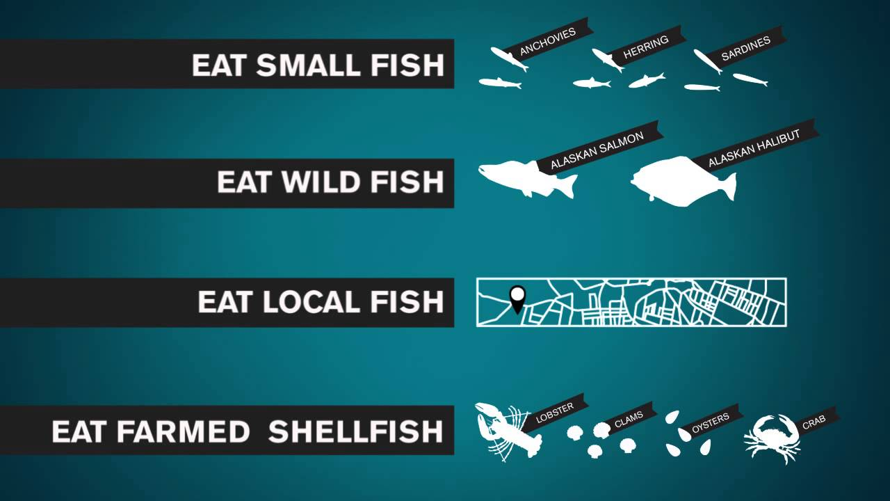 Sustainable seafood guide and how to make the right for What does sustainable fish mean