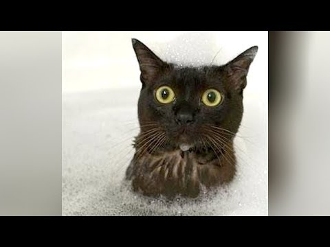Watch and you'll RISK YOUR LIFE, so FUNNY THAT IT WILL KILL YOU! - Funny CAT VIDEOS