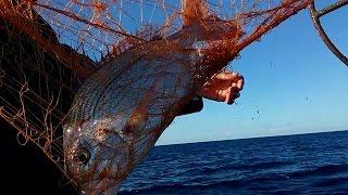 Profesyonel balıkçı teknesi ile ağ toplama.