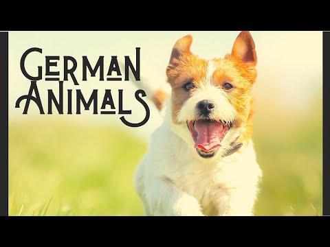 Bessere Kommunikation Englisch-Deutsch: Tiere im Business English | Nicht Übersetzbare Redewendungen