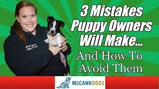 Tips For New Puppy Owners - Professional Dog Training Tips