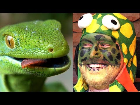 You're A Lizard, Smiffy!