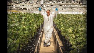 Harborside Cannabis Farm Tour: Steve DeAngelo / Green Flower