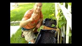 Urban Vegetable Gardening Wood Crate Video