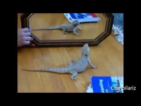 Ayna ve şaşkına dönen hayvanlar harika :)