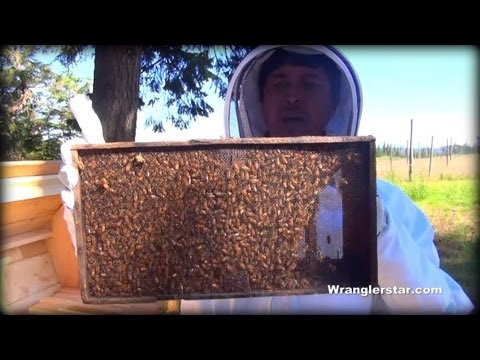 Honey Bees Back Yard Beekeeping Made Simple