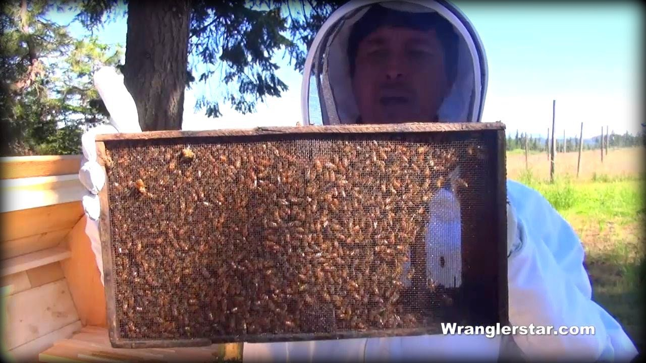 Honey Bees Back Yard Beekeeping Made Simple Youtube