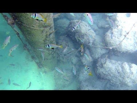 تصوير للأسماك بمملكة البحرين / Marine Life at Kingdom of Bahrain