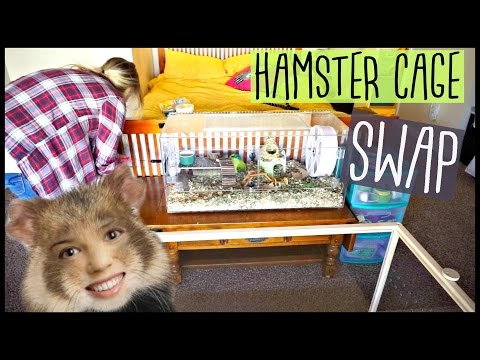 HAMSTER CAGE SWAP | Living World Green Eco Habitat | Pet Room