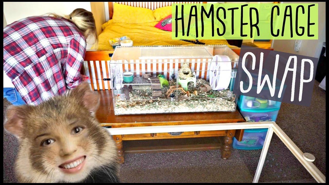 Hamster Cage Swap Living World Green Eco Habitat Pet Room Youtube