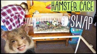 HAMSTER CAGE SWAP | Living World Green Eco Habitat | Pet Room