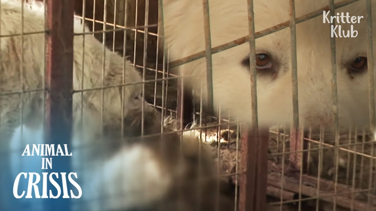 """""""Wake up.."""" Dog Watches His Friend Dying Out Of Hunger 