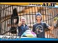 Kacer Alif Juara   Mp3 - Mp4 Download
