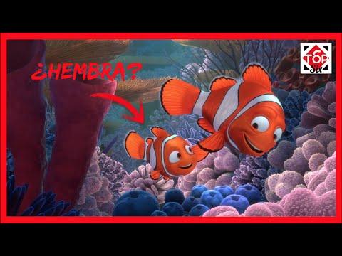 Nemo pudo ser hembra en la vida real curiosidades del pez for Curiosidades del pez espada