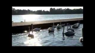 Sable - Water Shapes Us (Binaural Beats)
