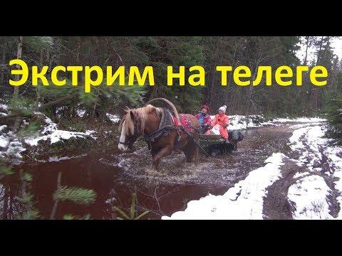 Для чего нужна в деревне лошадь?