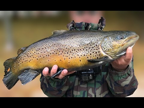 Big Lake Ontario Brown Trout Fishing - Mepps Black Fury Spinner 2018