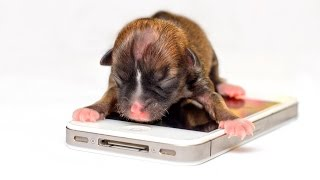 Top 10 Smallest And Cutest Dog Breeds In The World