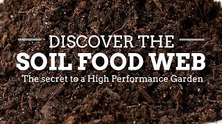 How the Soil Food Web Works in the Organic Garden