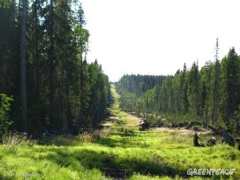 How Intact Forests Help Fight Climate Change...