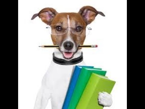 zak-george's-dog-training-revolution--how-to-teach-your-dog-to-stay-in-3-steps-force-free-zak-george