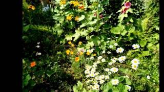 Мой фильм в моем саду цветы цветут.