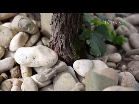 La Jara Organic Winery
