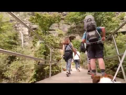 Through a dog's eyes   Traveling to Mountains with Foxy (Jack Russell Terrier)