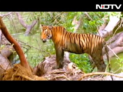 BR hills: The only Tiger reserve to house indigenous community