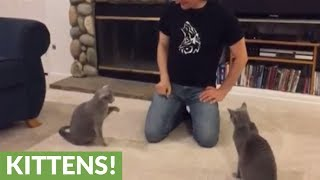 Talented cats show of array of tricks