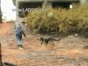 אילוף כלבים להגנה