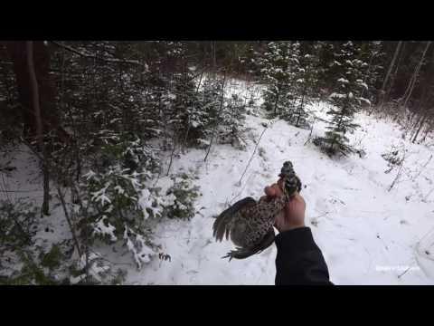 Охота на рябчика с манком