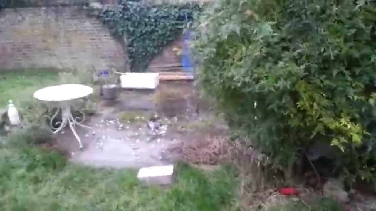 Pigeon Gets Eaten Then Smashes into Window