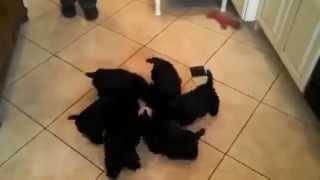 Прикольные щенки 7  (Прикольные собаки и кошки) funny, funny cats and dogs