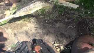 Cooking Trout On Camp Fire