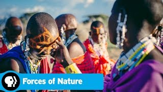 FORCES OF NATURE | Next on Episode 2 | PBS