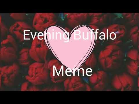 Evening Buffalo[Meme]